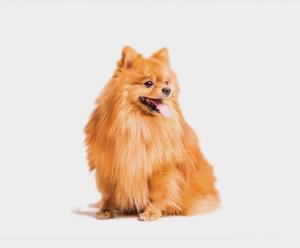 price-dog-1